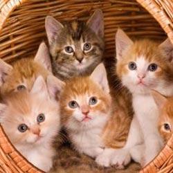 Запах от кошек